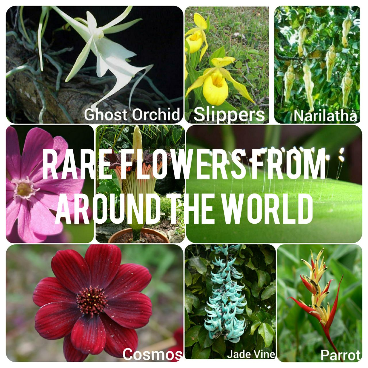 Top 10 Beautiful Rare Flowers In The World With Images